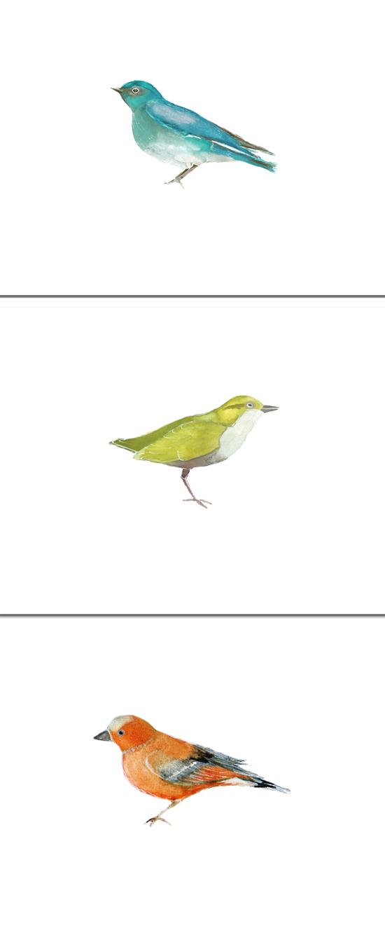 BirdTrio3